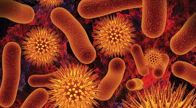 Microscopic view of Micro-Organisms 1